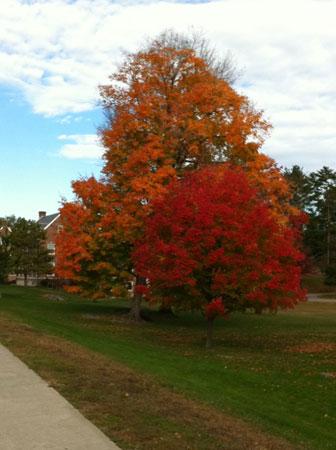 Fall_foliage4