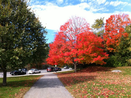 Fall_foliage2
