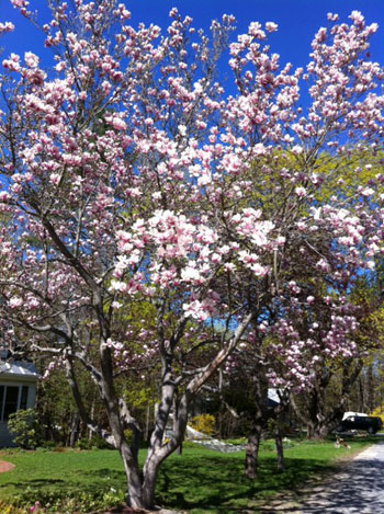 Durham-spring